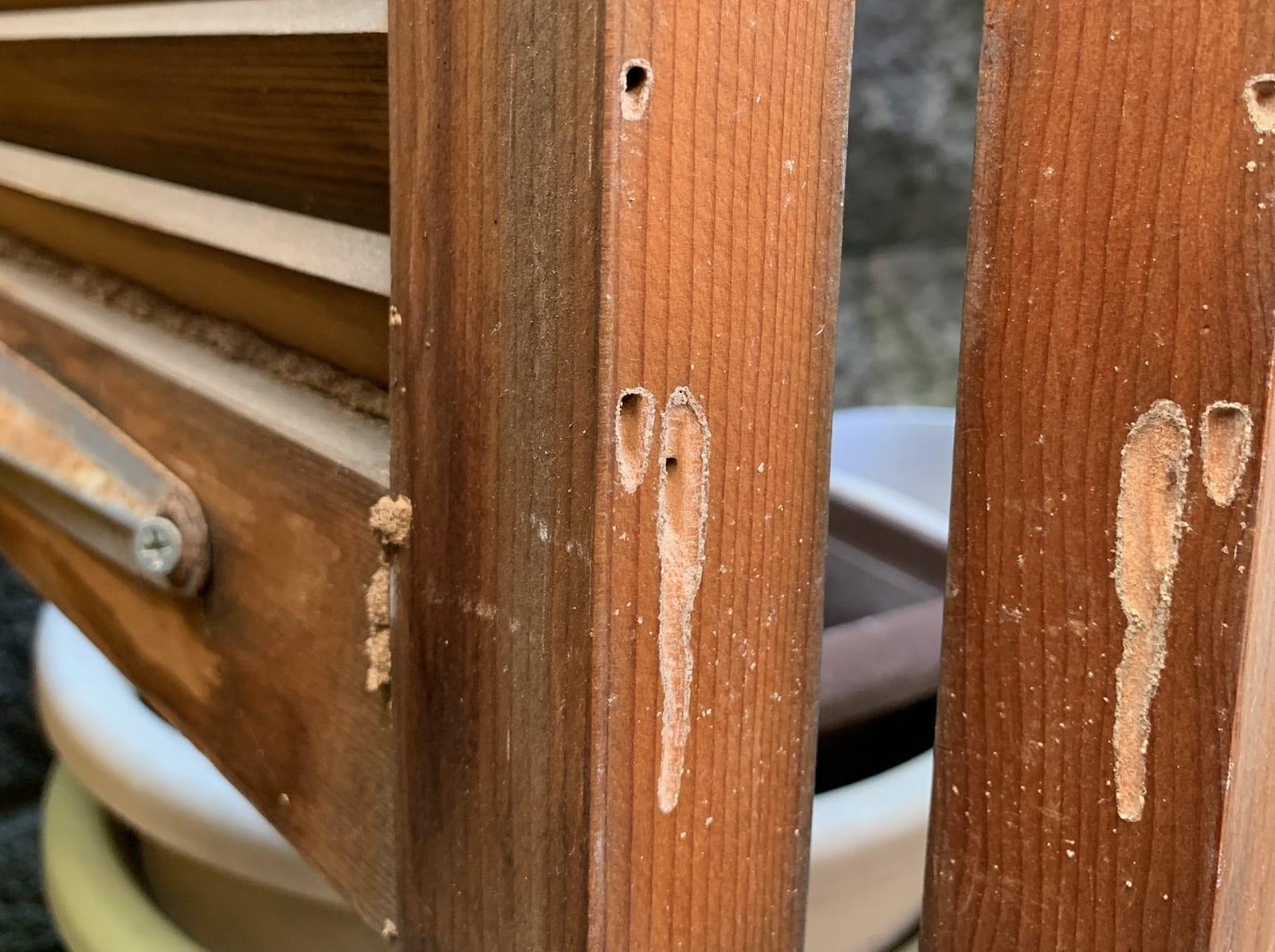 シロアリ被害のイラスト(ゲート)