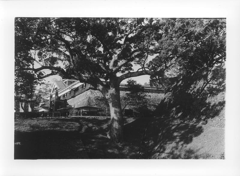 Tree and shadows, with a view of Kumamoto Castle