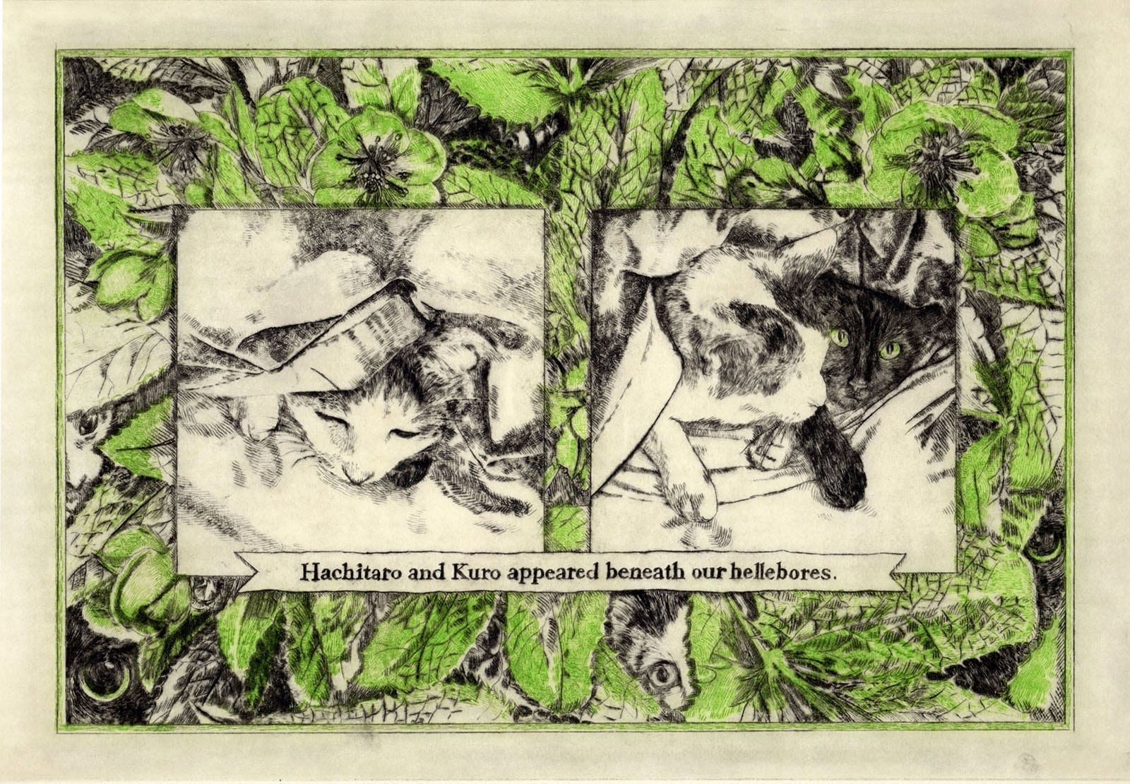 Hachi and Kuro appeared beneath our hellebores (drypoint etching by Yaemi Shigyo)