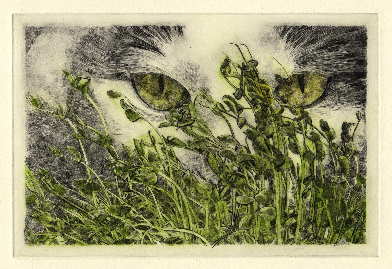 Hachi and pea greens (drypoint etching by Yaemi Shigyo)