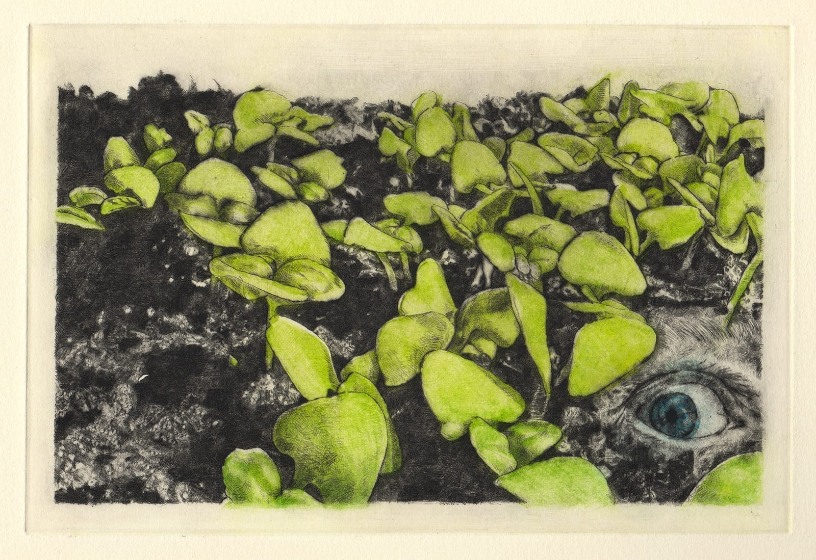 C and basil sprouts (drypoint etching by Yaemi Shigyo)