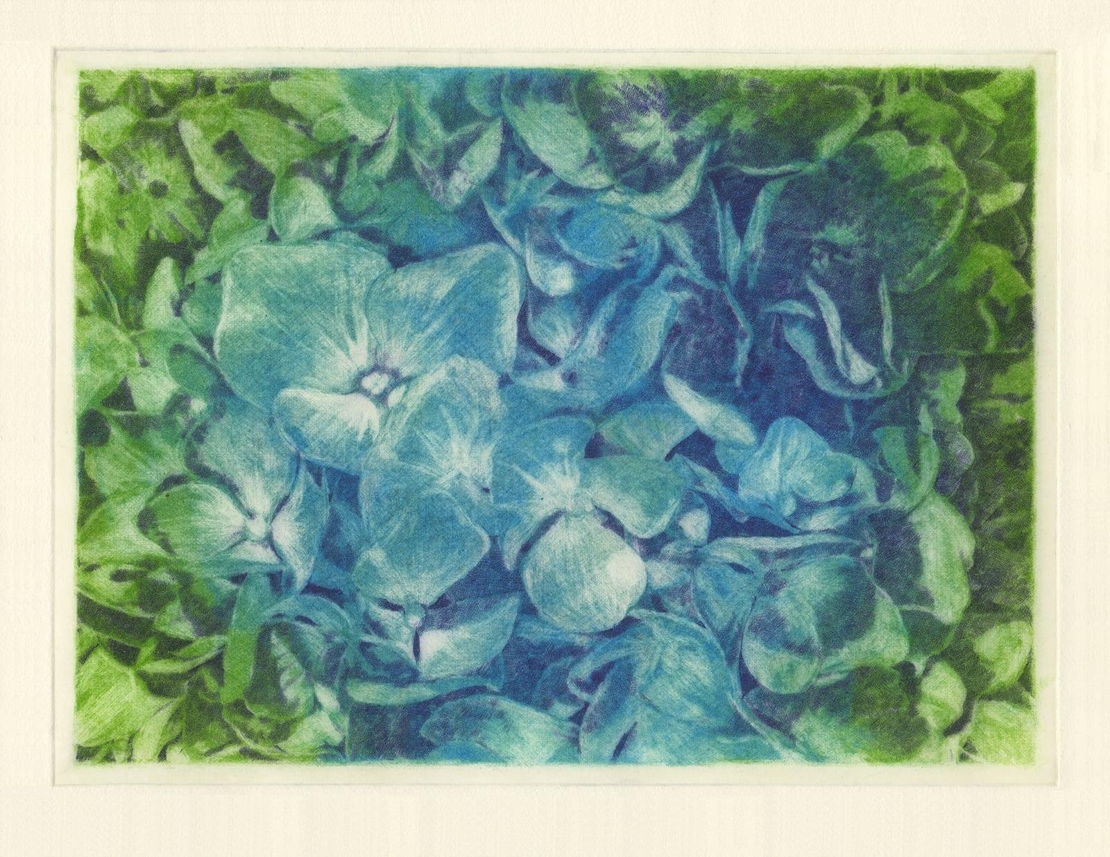 Thinking flowers: Hydrangea (drypoint etching by Yaemi Shigyo)