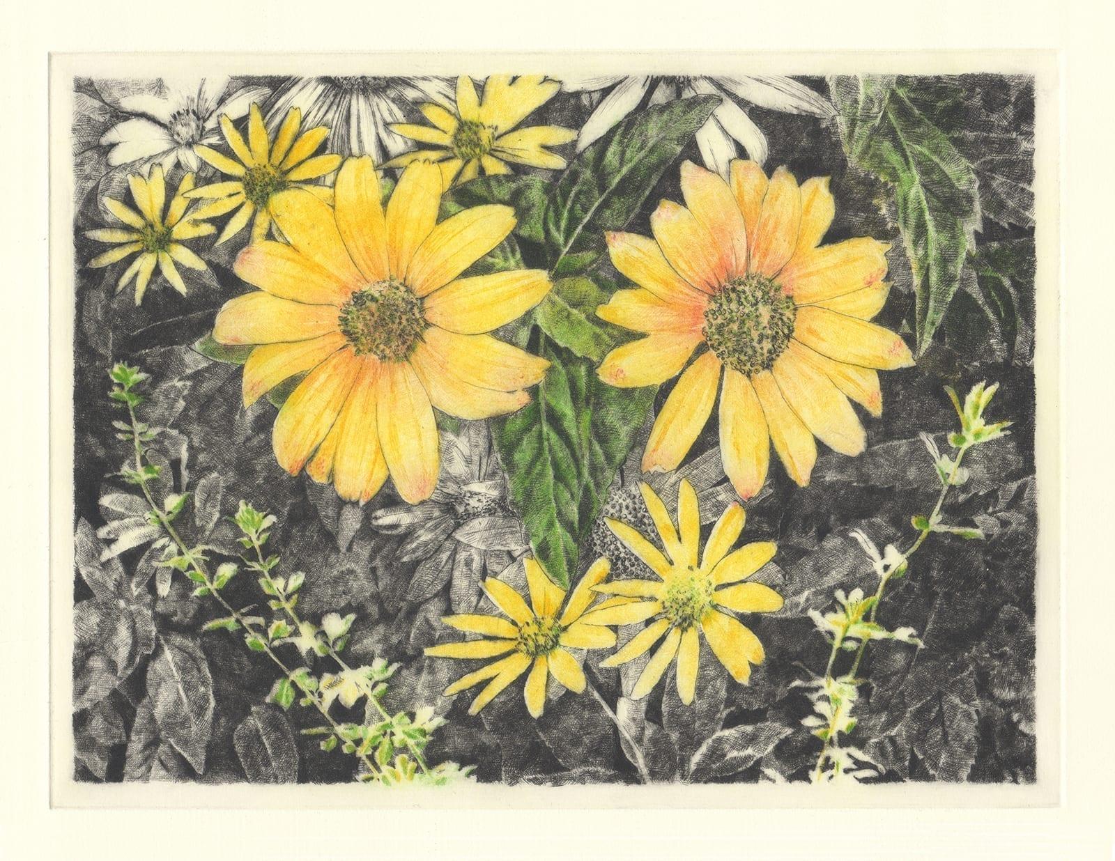 Talking flowers: Sunflower (drypoint etching by Yaemi Shigyo)