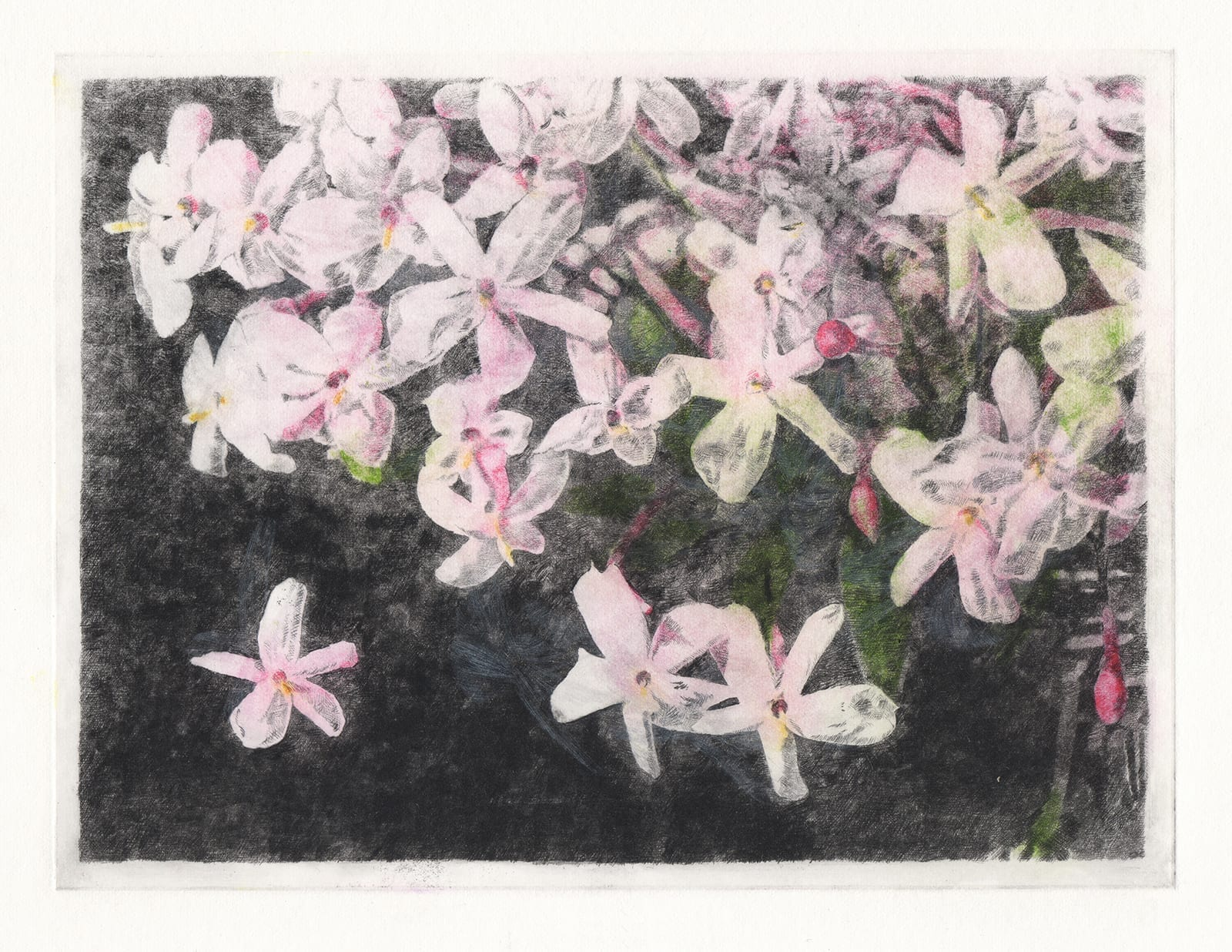 Dancing flowers: Jasmine (drypoint etching by Yaemi Shigyo)