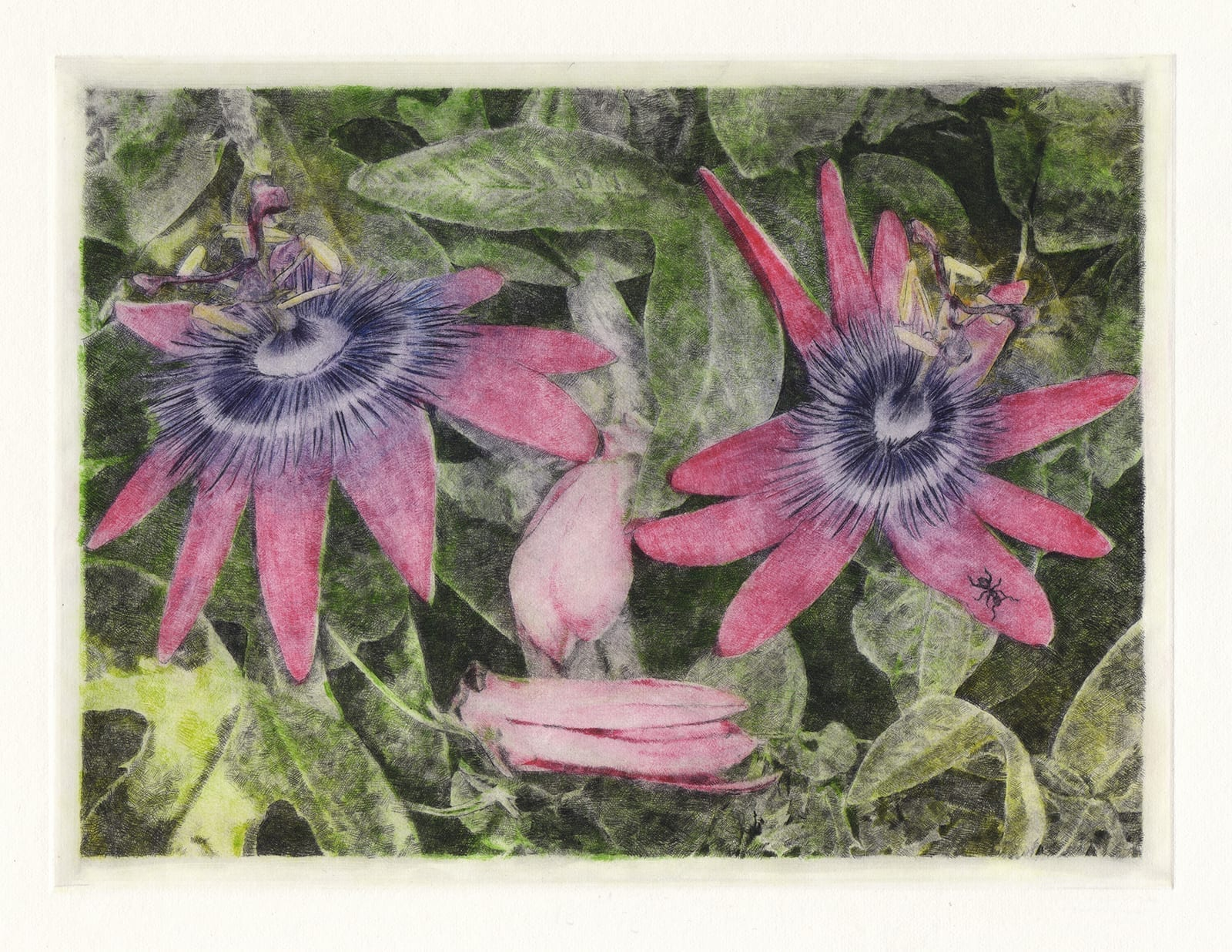 Laughing flowers: Passion flower (drypoint etching by Yaemi Shigyo)