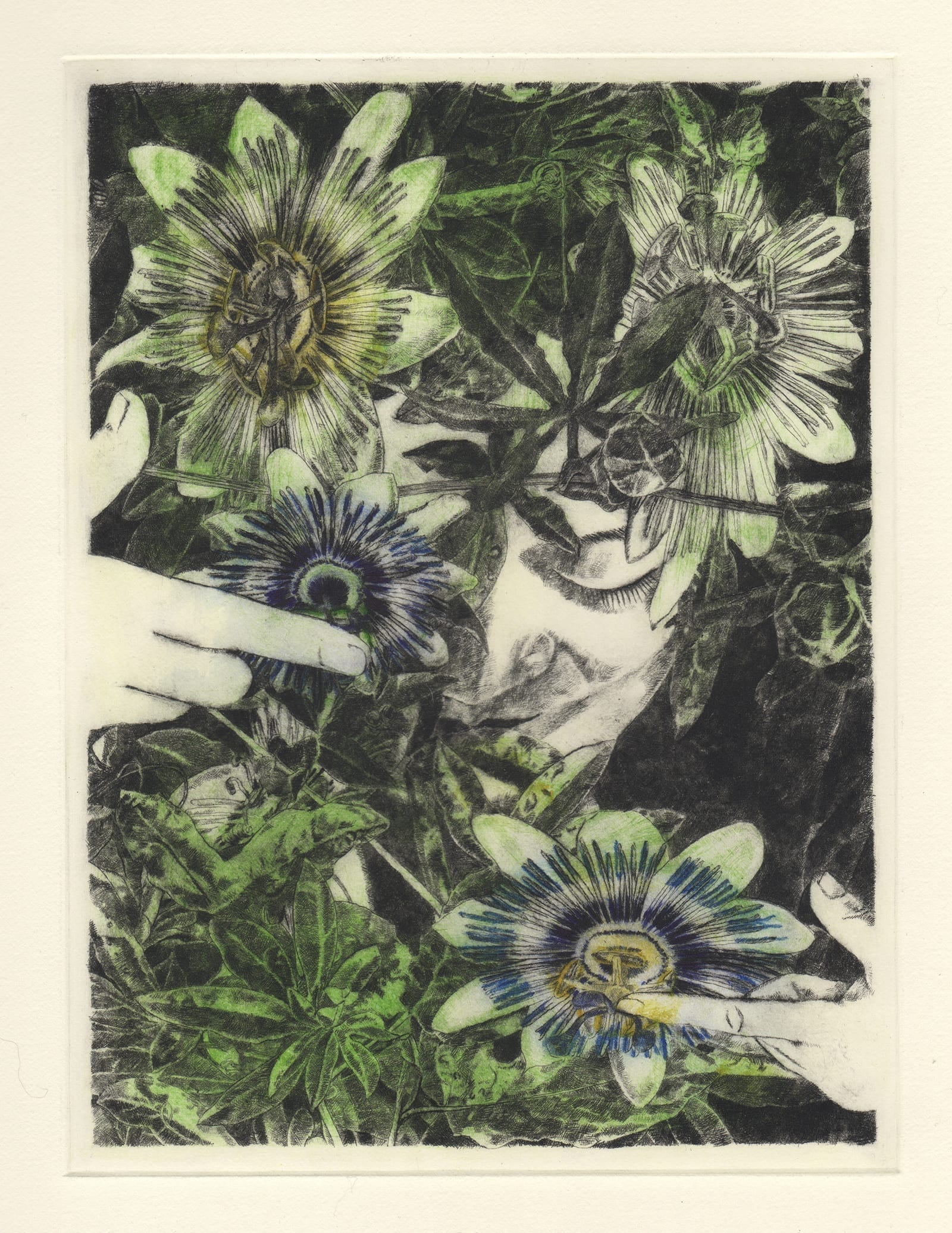 Passion flower (drypoint etching by Yaemi Shigyo)