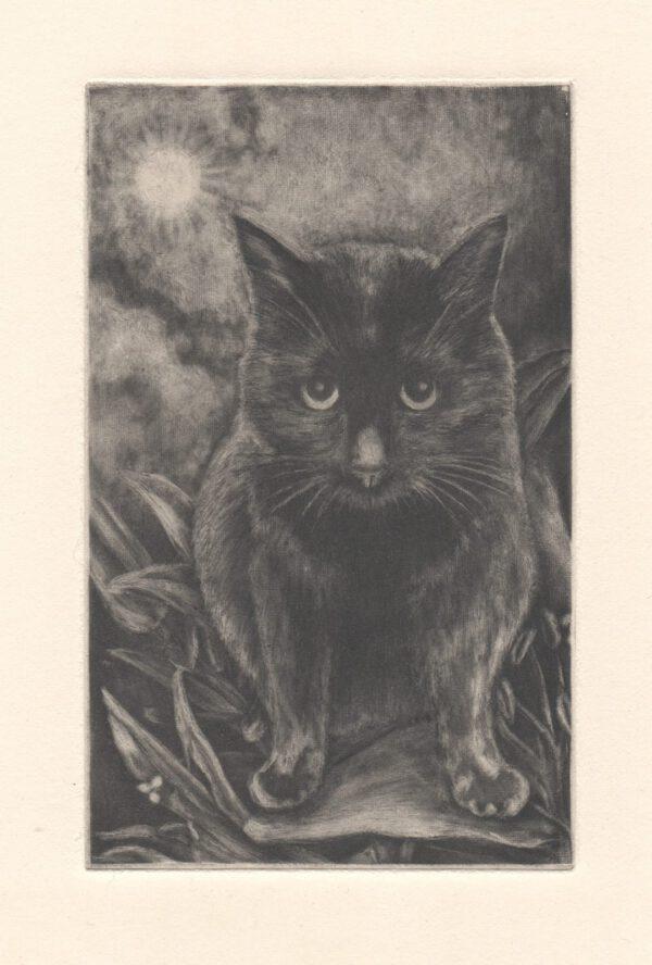 Kuro in Black postcard (front)